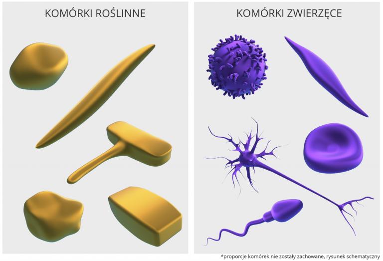 Jaką wielkość mają komórki budujące każdy żywy organizm?