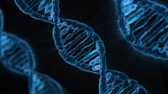 całkowita długość DNA człowieka - Laboratorium Młodego Badacza