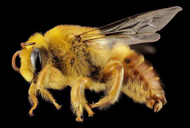 Pszczoły potrafią regulować temperaturę w ulu