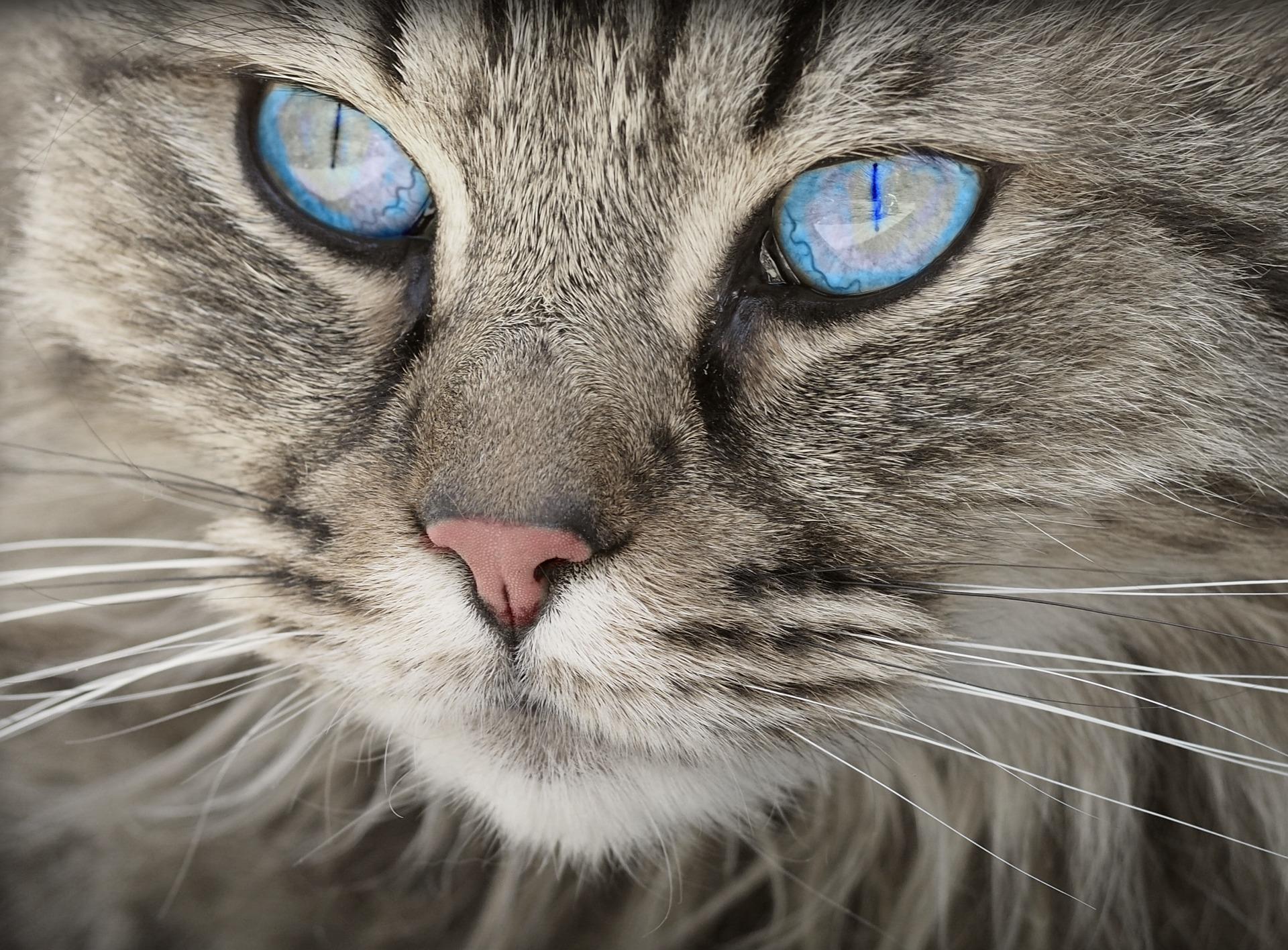 Dlaczego koty mruczą -Laboratorium Młodego Badacza
