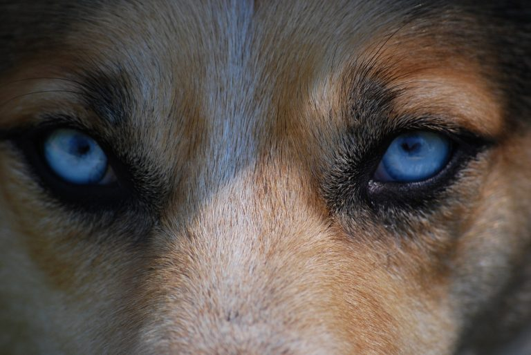 Jak psy widzą świat?