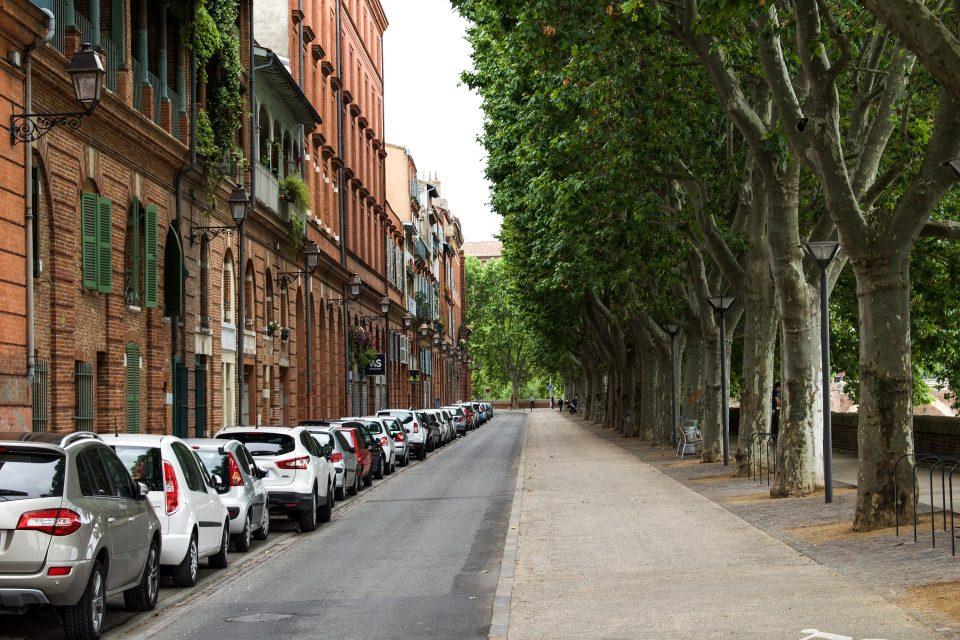 Dlaczego drzewa w mieście są na wagę złota