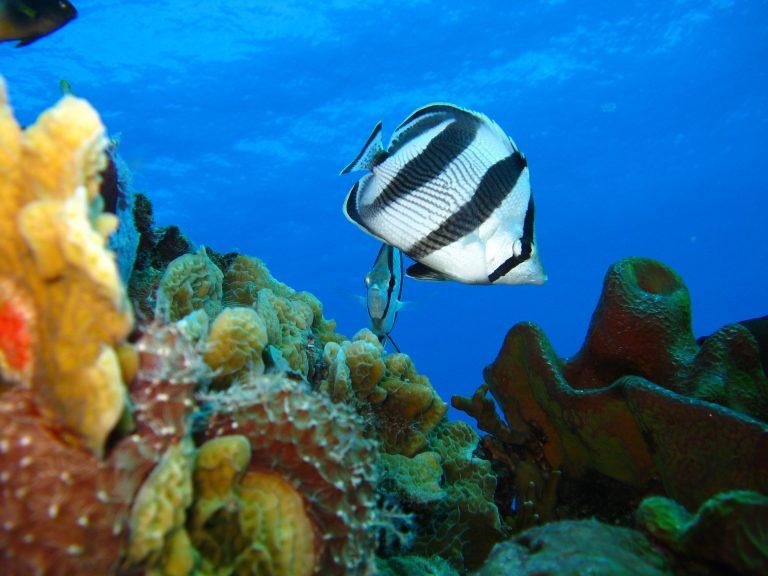 Jak wygląda życie w słonej wodzie?