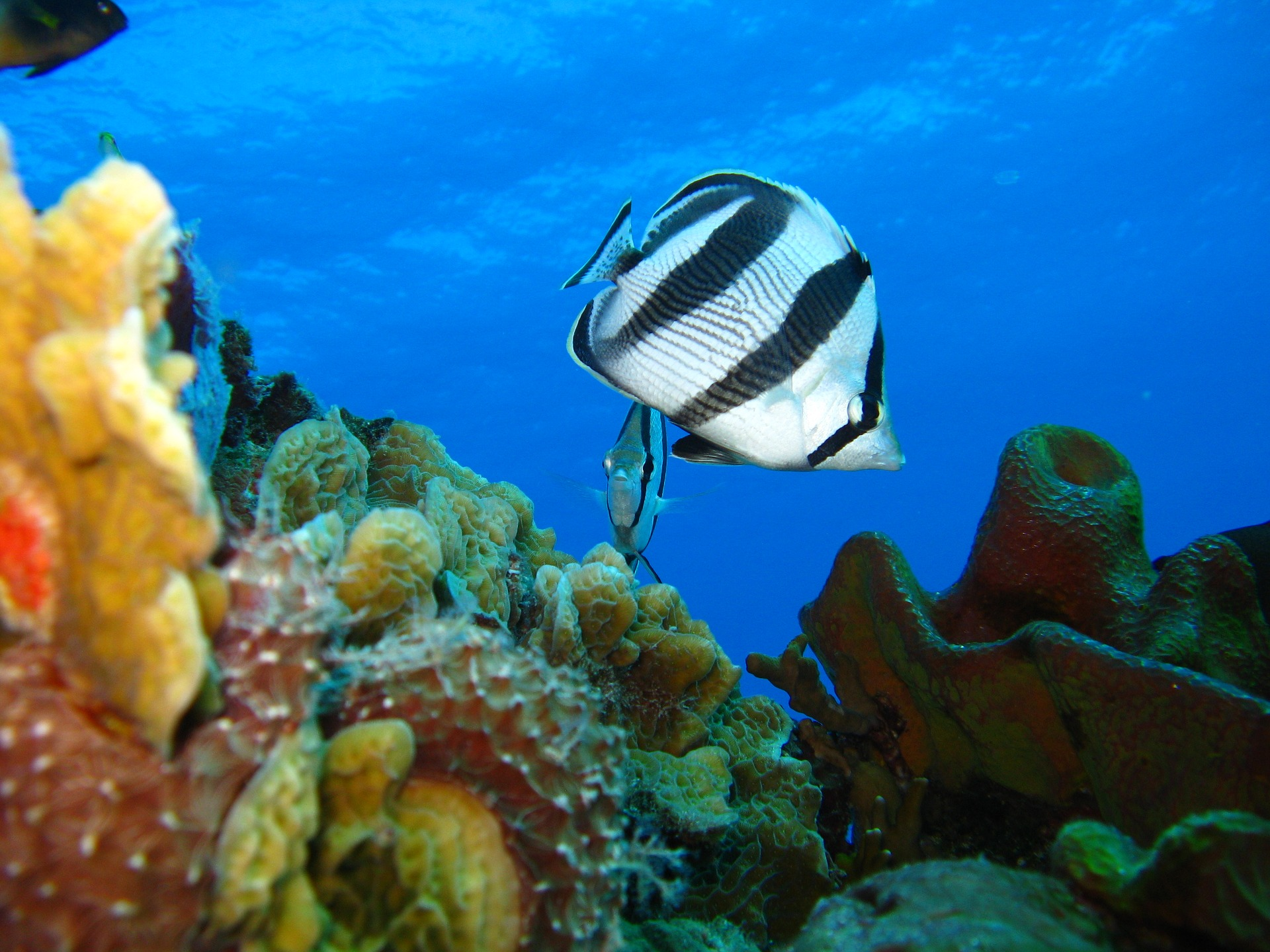 życie w słonej wodzie