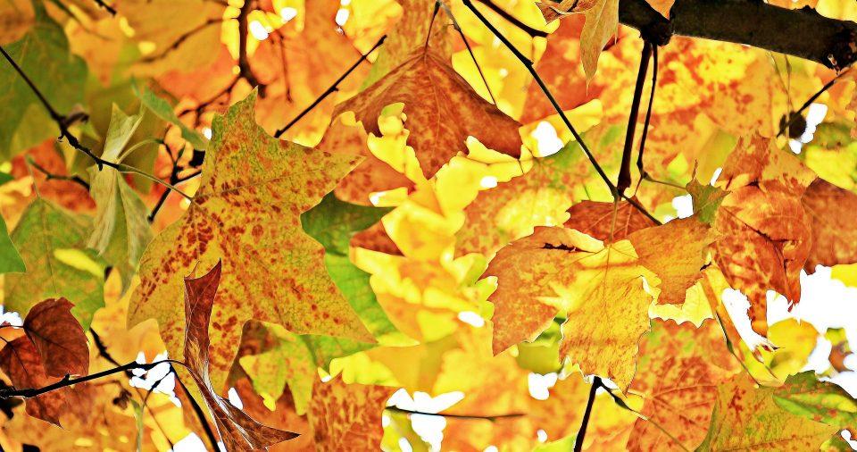 kolory jesiennych liści